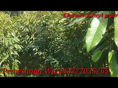 SULTAN POKEMON BELI POKECOIN PULUHAN JUTA!! - POKEMON GO INDONESIA from YouTube · Duration:  17 minutes 26 seconds