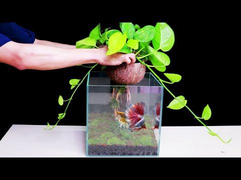 amazing-diy-nano-aquascape-from-coconut---how-to-make-mini-aquarium-fish-tank-at-home-decor-ideas