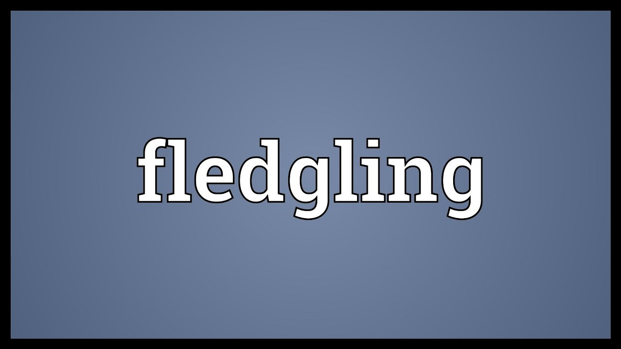 Fledgling Meaning