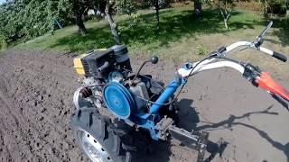 Мотоблоком сеем ГОРЧИЦУ в сухую почву.НАВОЗ больше не нужен?
