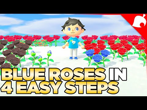 How to Get Blue Roses in 4 Easy Steps! Animal Crossing New Horizons