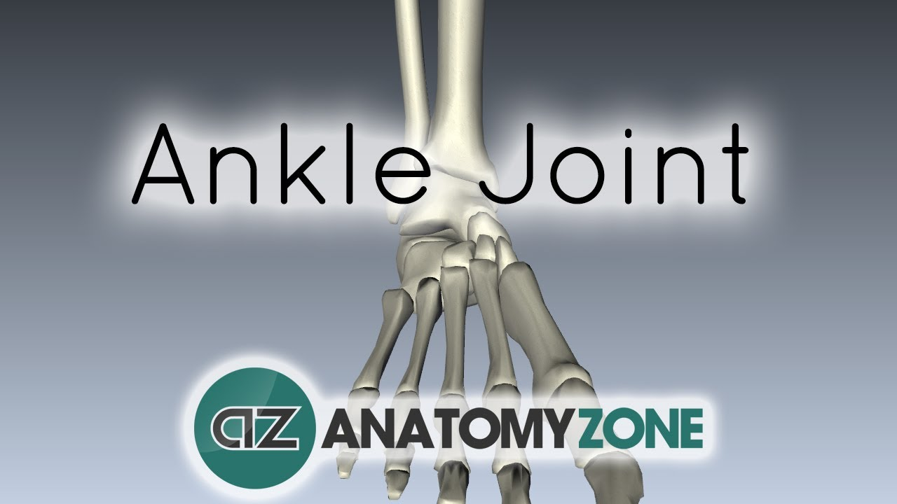 Ankle Joint - 3D Anatomy Tutorial - YouTube