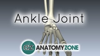 Ankle Joint - 3D Anatomy Tutorial