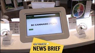 BC Cannabis broke bylaws