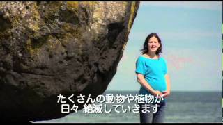 2011年6月25日(土)より東京都写真美術館ほか全国順次公開 1992年の地...