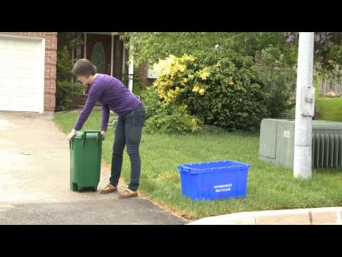 Meet Binny -- Your Guide To Waste And Recycling In Newmarket