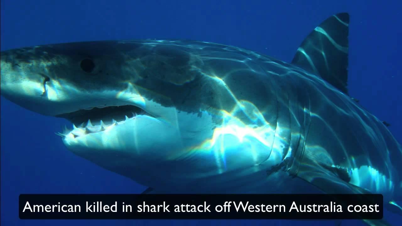 American Killed In Shark Attack Off Western Australia