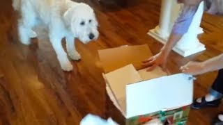 This Dog Saw His Birthday Gift Inside This Cardboard Box – And His Reaction Has Swept The Internet