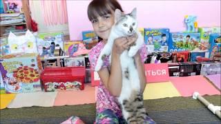 Новая полоса препятствий и кошка Карамелька Любимые питомцы Лизы funny animals