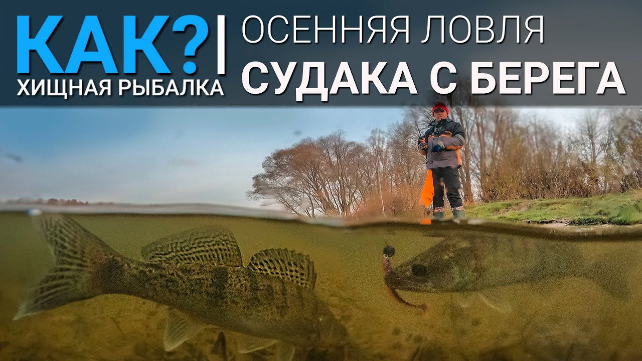 КАК? Ловля судака с берега осенью.