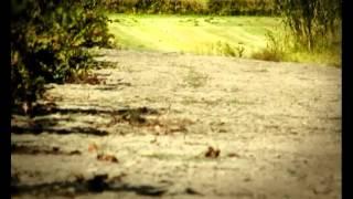 Csodabogarak - A rózsaszin nyalóka (3.évad 11.rész)