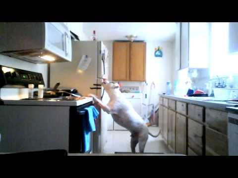 my dog breaks into the fridge