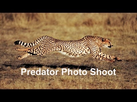 Predator Photo Shoot - Namibia