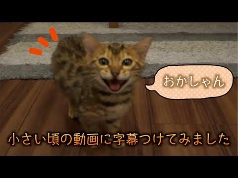 ルトとロゼの子猫時代の昔の動画に字幕つけてみたよ!!