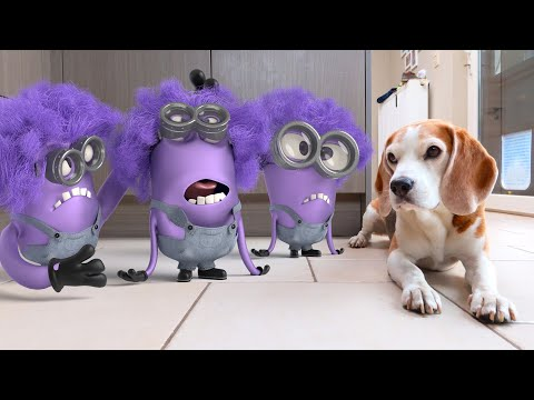 Minions in Real Life vs Funny Dogs Louie & Marie : Christmas Special