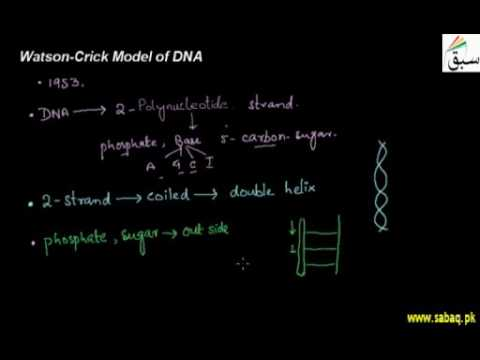 DNA —The Thread of Life: Watson-Crick Model, Characteristics