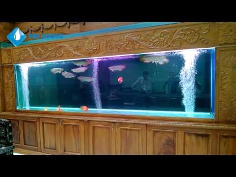 Hồ cá rồng cộng đồng dài 4,7m với 9 em huyết long