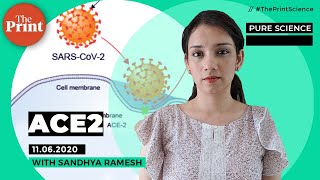 All about the ACE2 receptor the coronavirus uses to enter our bodies