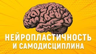 ИЗМЕНИ СВОЙ МОЗГ. Нейропластичность и сила воли