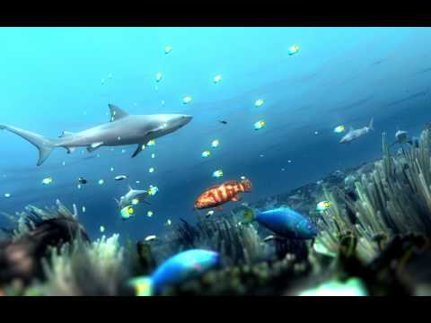Coral Reef Decline With The Loss Of Sharks