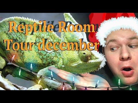 Reptile Room Tour December!