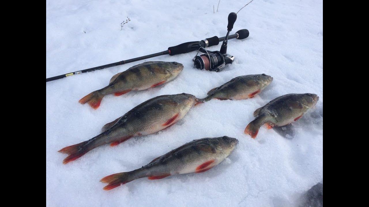 Рыбалка от Михалыча! Зимний спиннинг на Южном Буге! Хороший клев окуня!