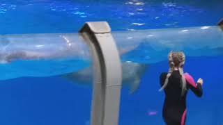 Москвариум / дельфины / шоу ,,Кругосветное путешествие'' / 12.10.19.
