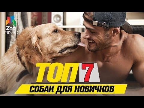 Топ 7 собак для новичков | Top 7 Dogs For Beginners
