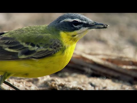 Deadly Oasis In The Sahara Desert - Africa - BBC
