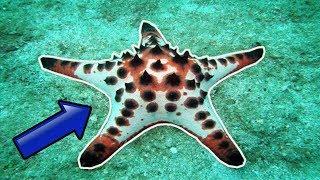 11 Cosas que No Sabías de las Estrellas de Mar | iTownGamePlay