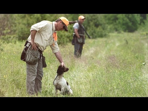 Episode 24: Todd Agnew- Training Trainers To Handle Spaniels