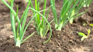 Agroleaf Power
