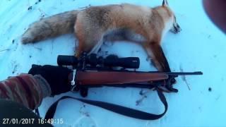 Охота на лису с нарезным зимой