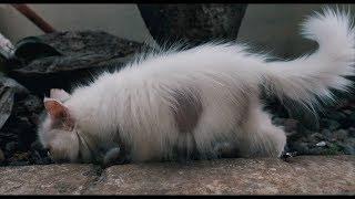 Kitten jamuran parah :(