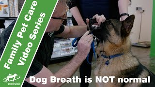 Dog Breath is NOT Normal- Companion Animal Vets