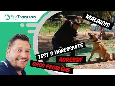 EDUCATEUR CANIN PARIS/ CHIEN AGRESSIF/ERIC TRAMSON