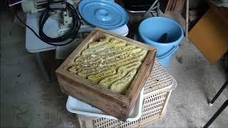 手際のよい簡単な日本ミツバチの採蜜 完全版 平成29年7月