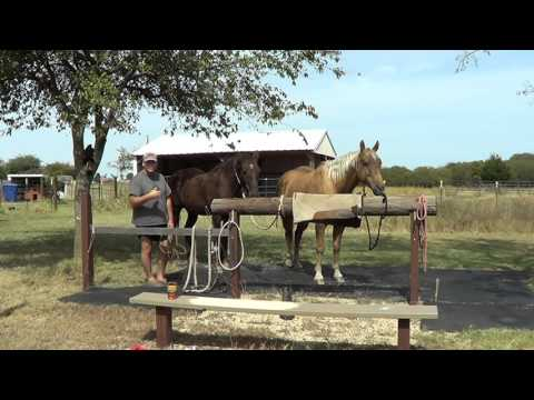 Part 2 Dealing With New Horse - Evaluating Horses With Pressure and Release