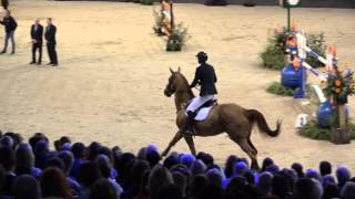 Jos Verlooy   Sunshine   4e Rolex Grand Prix   Indoor Brabant 13 3 2016