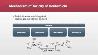 Gentamicin Toxicity