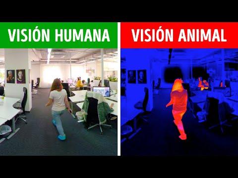 Cómo Ven El Mundo Los Personajes y Personas Famosas En Realidad   360 VR