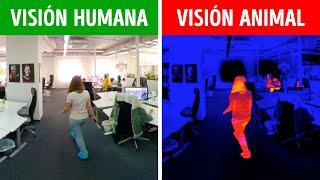 Cómo Ven El Mundo Los Personajes y Personas Famosas En Realidad | 360 VR