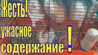 Ужасное содержание морских свинок/Бедные свинки/Ужасное содержание животных/Как нельзя содержать