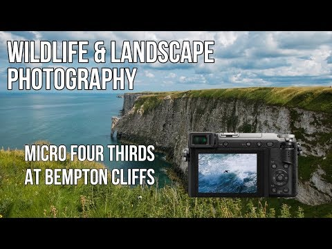 Wildlife & Landscape photography | Micro Four Thirds at Bempton Cliffs - How did we get along?