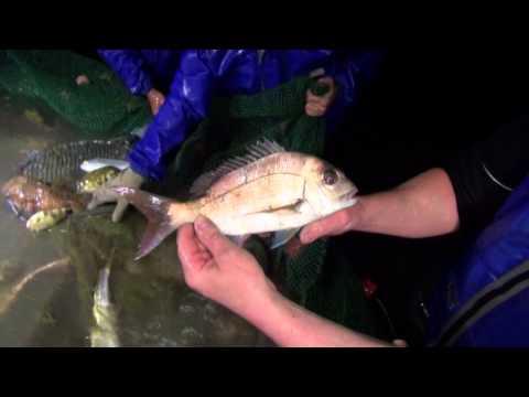 The Australian seafood Episode 6 (Port Phillip bay)