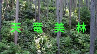 天竜美林の山々(NO1)