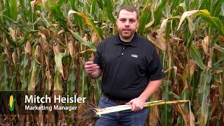 Avoiding Harvest Losses from Stalk Rot