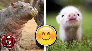 TOP 7 CRIAS DE ANIMALES MAS TIERNAS DEL MUNDO