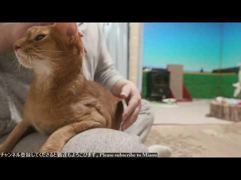 2018.8.5 猫日記   Cats & Kittens room 【Miaou みゃう】