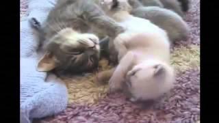 кошки чудят